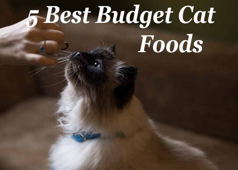Best Budget Cat Foods Low Cost But Quality Cat Mania