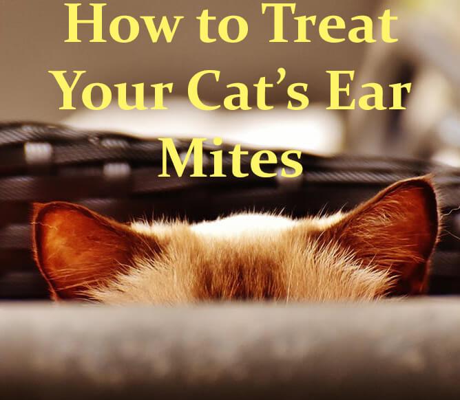 Cat Skin Parasites Pictures