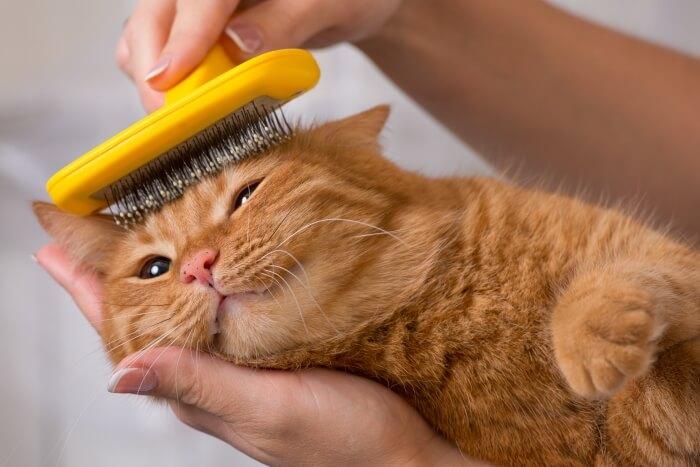 brush your cat