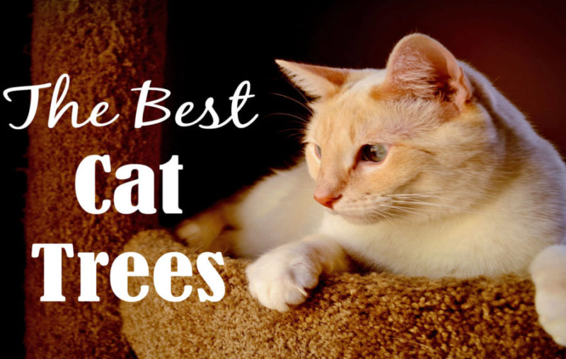Best Cat Trees Reviewed 2018   Cat Mania   For Cat Lovers