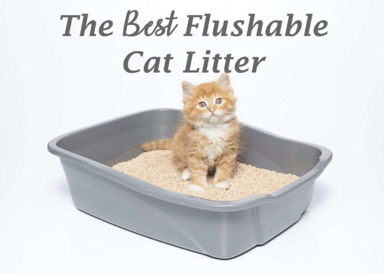 The Best Flushable Cat Litter