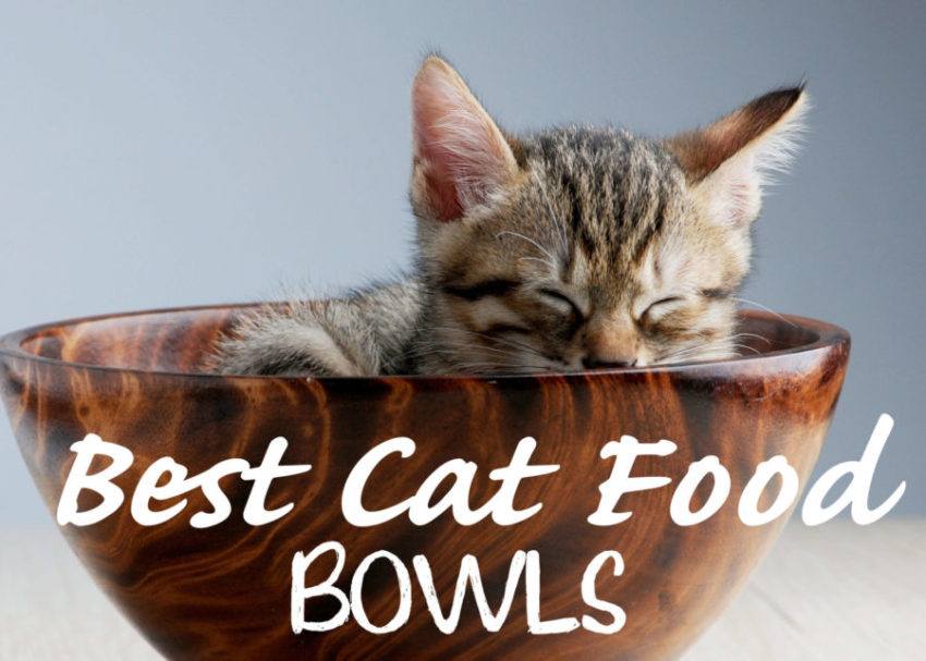 Best Cat Food Bowls For Whisker Fatigue 2020 Cat Mania