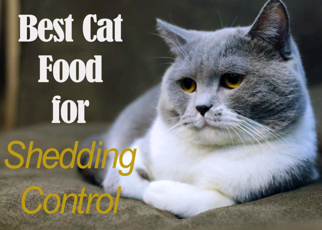 Best Cat Food For Shedding Control 2019 Cat Mania