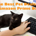 The Best Pet Deals on Amazon Prime Day