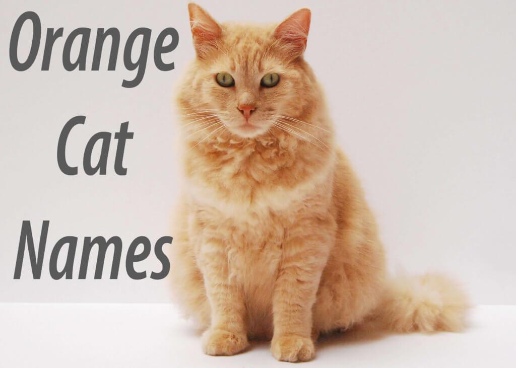 Orange Cat Names : 100 + Ginger Names