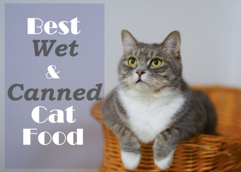 Best Wet Soft and Canned Cat Food