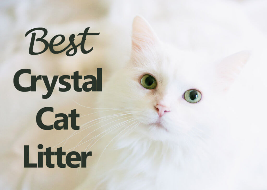 Best Crystal Cat Litter