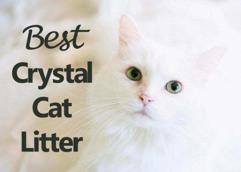 Best Crystal Cat Litter