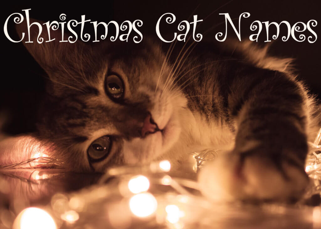 Christmas Cat Names - 60 + Merry Names