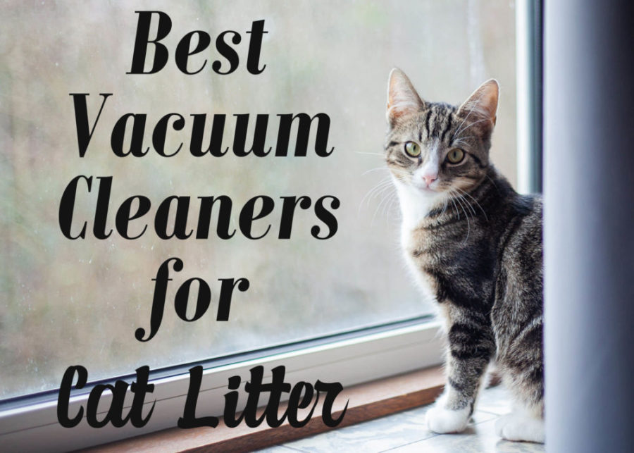 8 Best Vacuum Cleaners For Cat Litter 2020 Cat Mania