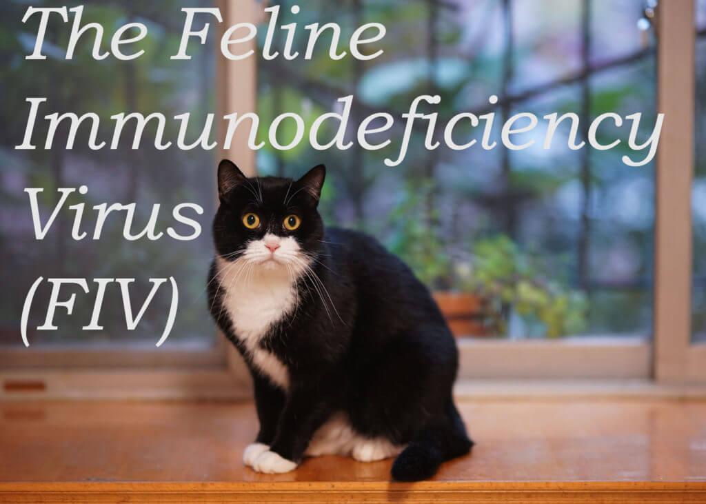 The Feline Immunodeficiency Virus