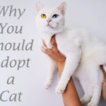Why You Should Adopt a Cat