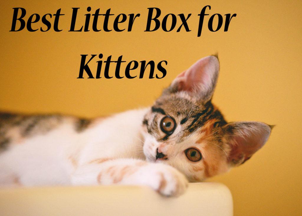 Best Litter Box for Kittens