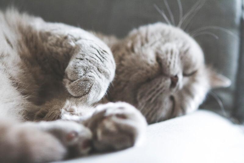 grey cat names