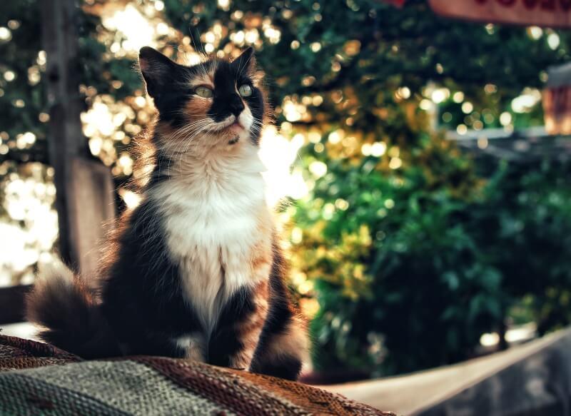 Unusual Calico Cat Names