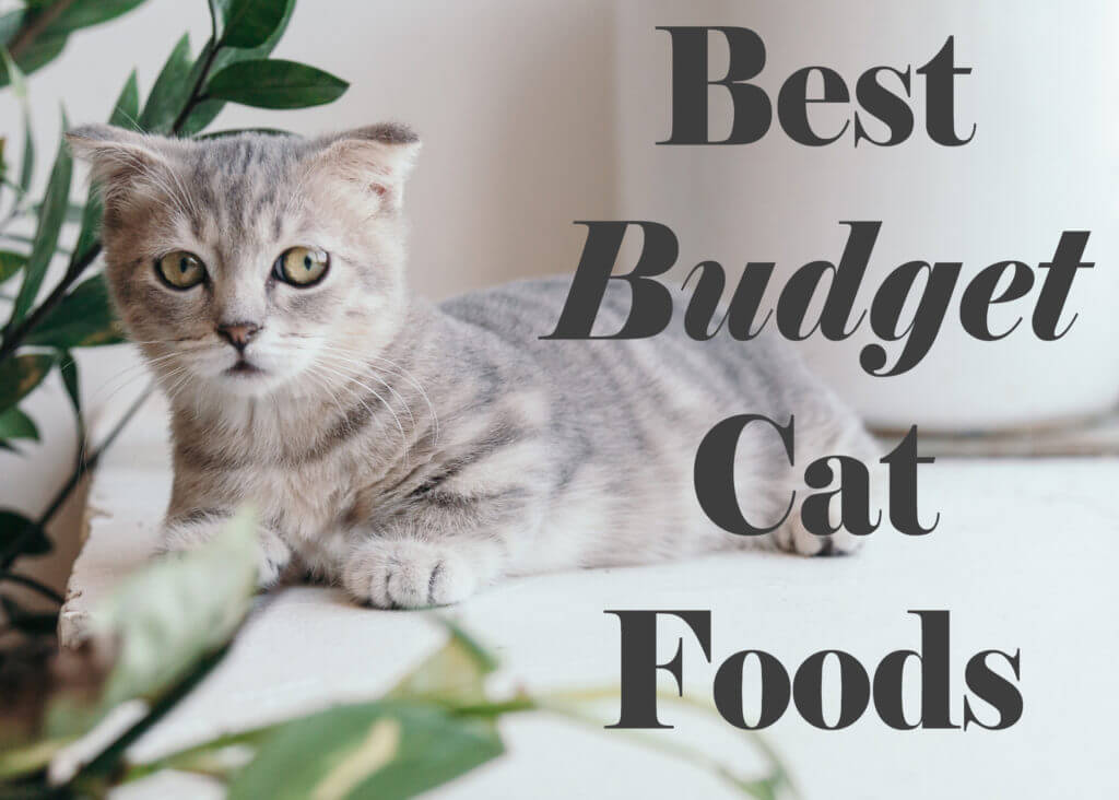 Best Budget Cat Foods