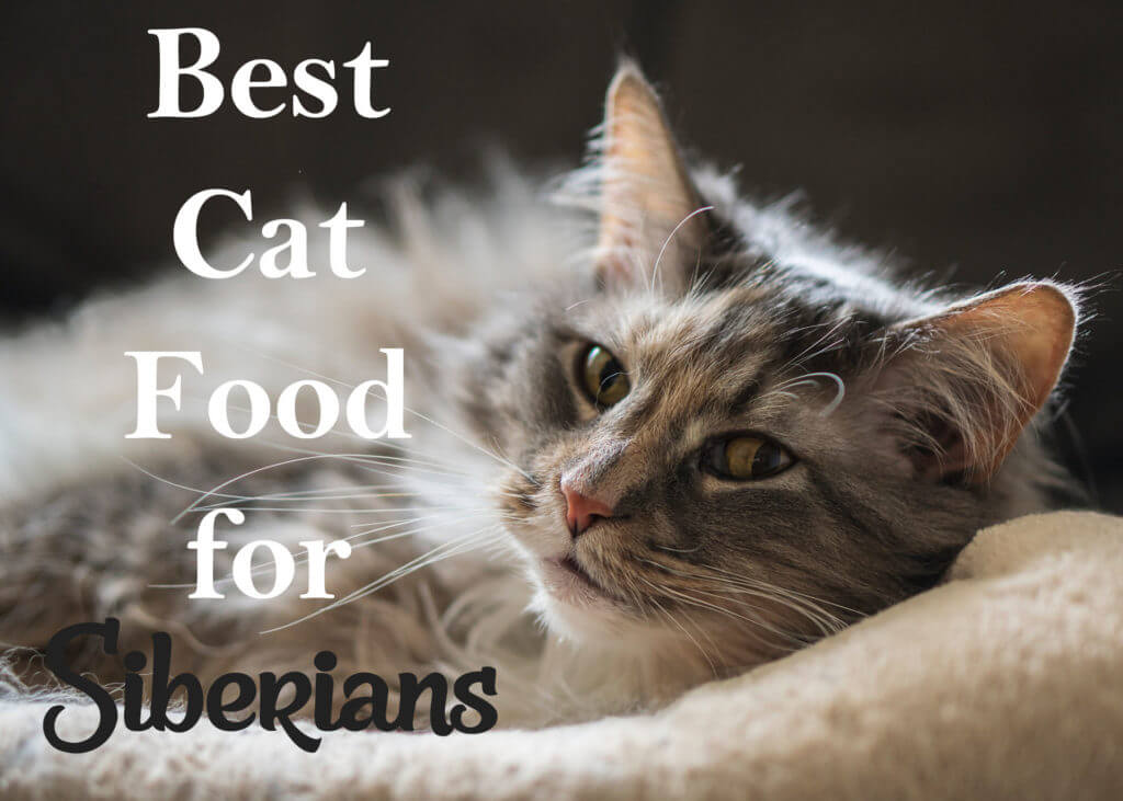 6 Best Cat Foods For Siberian Cats 2020 Cat Mania Reviews