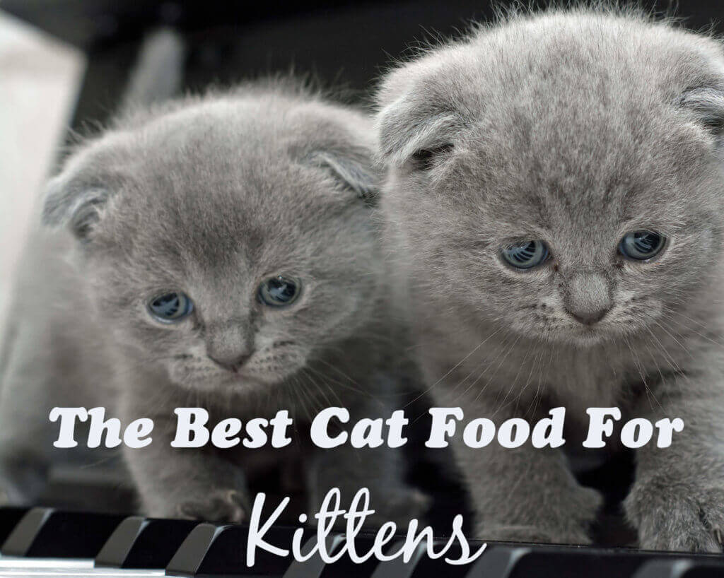 The Best Cat Food For Kittens