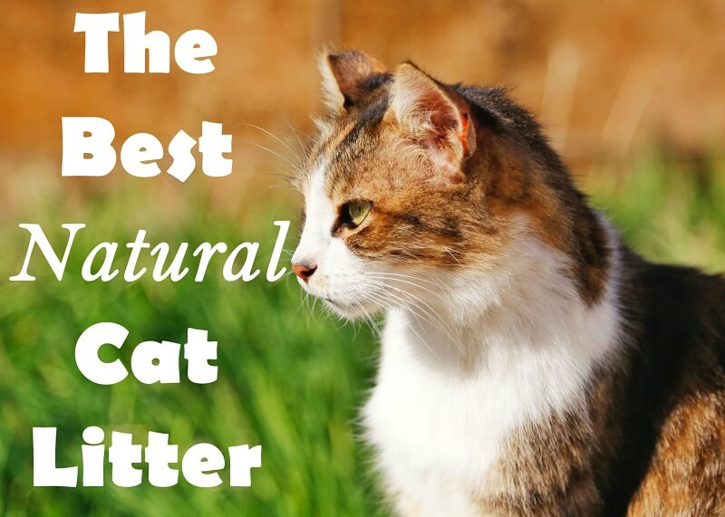The Best Natural Cat Litter | Cat Mania | For Cat Lovers