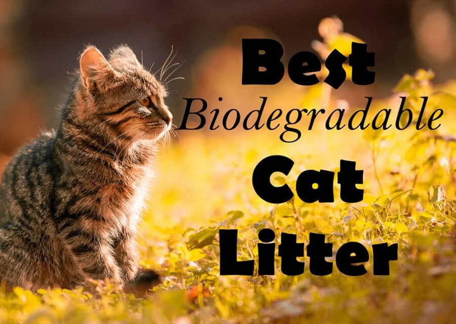 Best Biodegradable Cat Litter