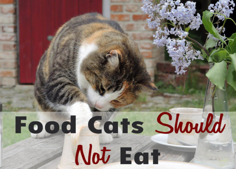 What Foods Cats Should Not Eat?