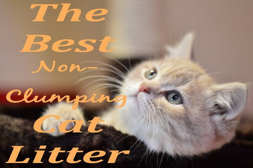 The Best Non-Clumping Cat Litter