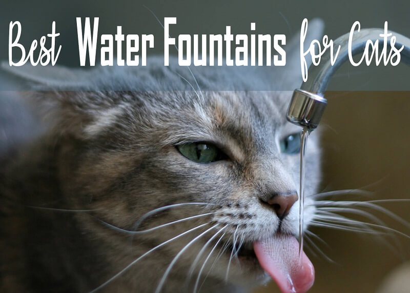 Best Water Fountains for Cats