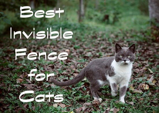 Best Invisible Fence for Cats