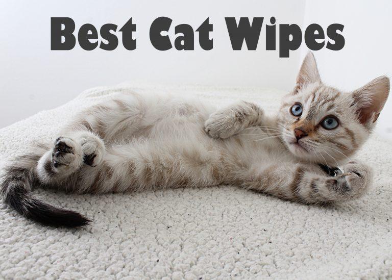 Best Cat Wipes