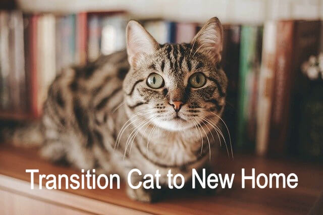 transition cat to new home