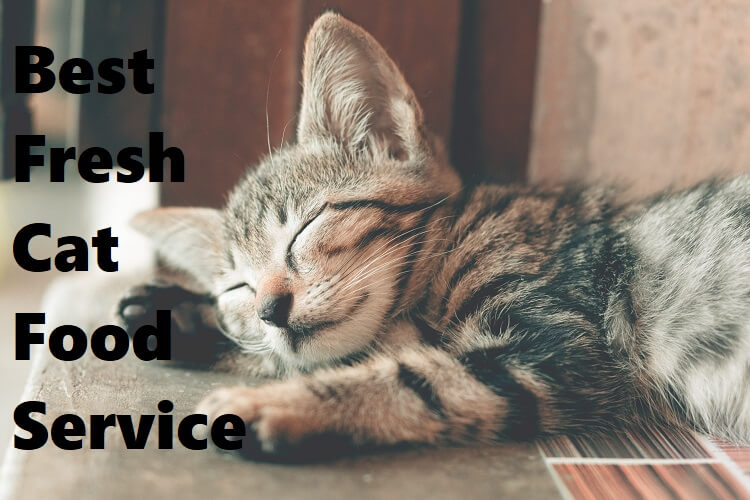 Best Fresh Cat Food Service