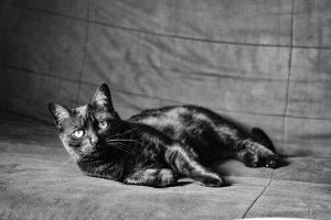 Best Black Cat Names Of 2020 Cat Mania
