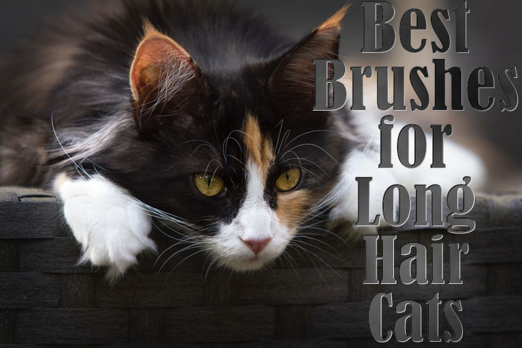 Best brushes for long hair cats