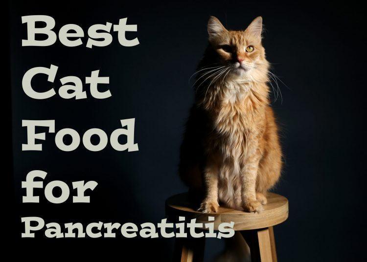 Cat Food for Pancreatitis