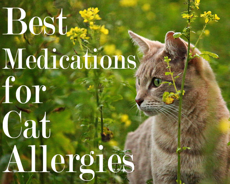 Best Medications for Cat Allergies