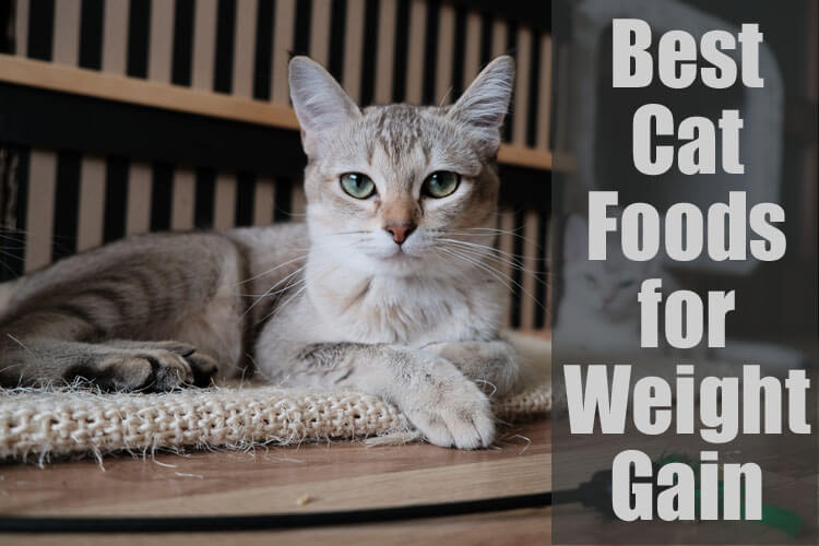 Best Cat Foods for Weight Gain