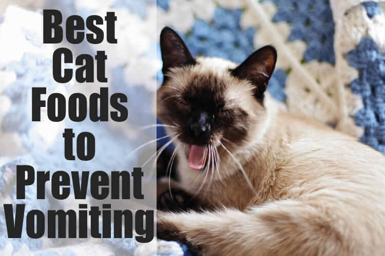 Best Cat Foods to Prevent Vomiting